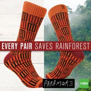 Rainforest_500